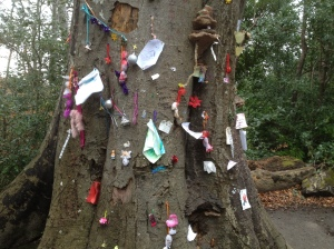 A Fairy Tree in Marlay Park, Dublin